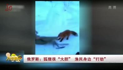 """俄羅斯:狐狸很""""大膽"""" 漁民身邊""""打劫"""""""