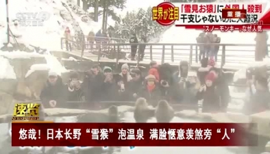 """悠哉!日本長野""""雪猴""""泡溫泉 滿臉愜意羨煞旁""""人"""""""