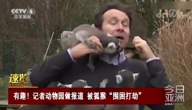"""有趣!記者動物園做報道 被狐猴""""圍困打劫"""""""