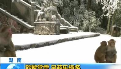 湖南:獼猴賞雪 呆萌樂趣多