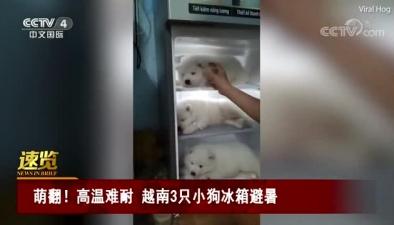 萌翻!高溫難耐 越南3只小狗冰箱避暑