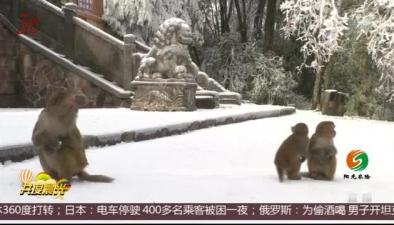 湖南張家界:獼猴賞雪樂趣多