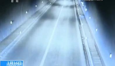 重慶:肥豬高速隧道亂竄 引發兩起事故