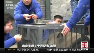 中國兩只大熊貓今日啟程前往芬蘭