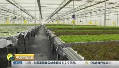 植物工廠告別土壤 流水種菜産量倍增