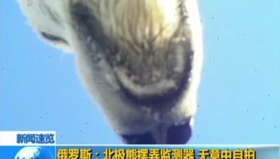 俄羅斯:北極熊擺弄監測器 無意中自拍