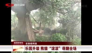 """霧裏看熊貓:樂園升級 熊貓""""滾滾""""萌翻全場"""