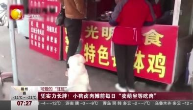 """可愛的""""旺旺"""":憑實力長胖! 小狗鹵肉攤前每日""""賣萌坐等吃肉"""""""