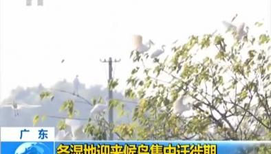 廣東:各濕地迎來候鳥集中遷徙期