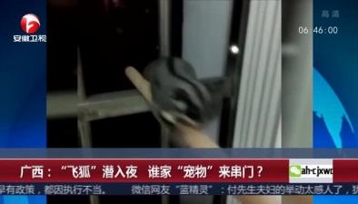"""廣西:""""飛狐""""潛入夜 誰家""""寵物""""來串門?"""