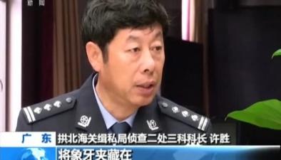 廣東:拱北海關截獲走私象牙130公斤