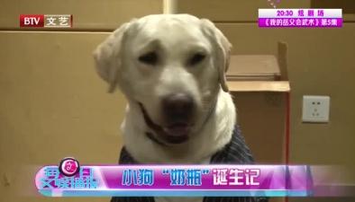 """小狗""""奶瓶""""展現實力演技!"""