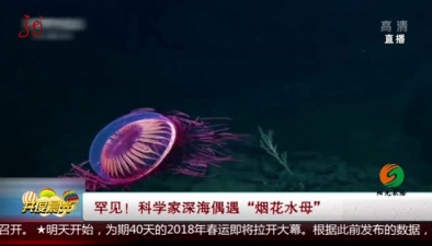 """罕見!科學家深海偶遇""""煙花水母"""""""