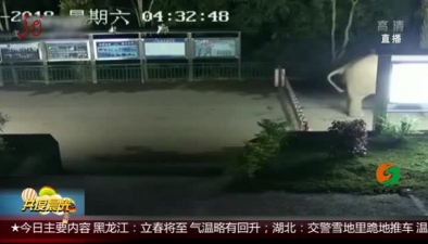 """雲南:野象強行""""衝關"""" 越境覓食"""
