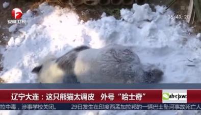 """遼寧大連:這只熊貓太調皮 外號""""哈士奇"""""""