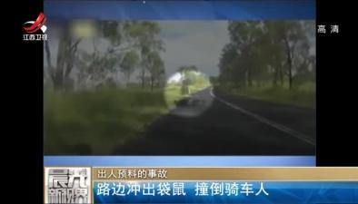 出人預料的事故:路邊衝出袋鼠 撞倒騎車人