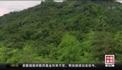 四川雅安:今年首次拍攝到野生大熊貓
