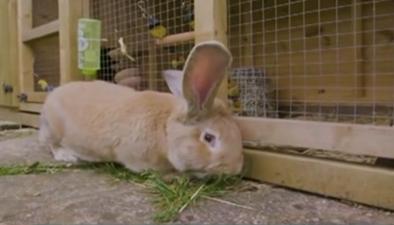 巨型兔子 呆萌可愛