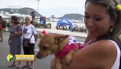 巴西裏約熱內盧寵物狗狂歡派對