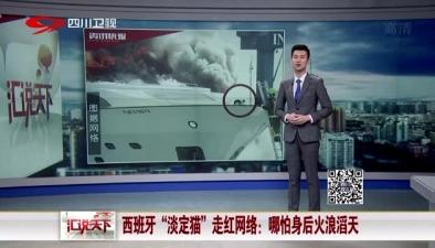"""西班牙""""淡定貓""""走紅網絡:哪怕身後火浪滔天"""