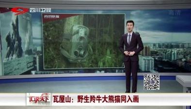 瓦屋山:野生羚牛大熊貓同入畫
