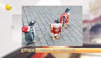 穿唐裝背書包 企鵝一家逛中央大街