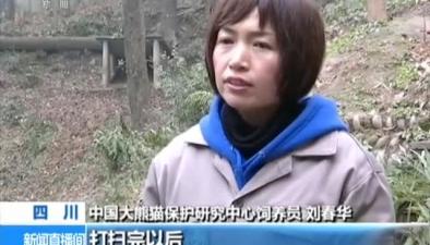 熊貓奶爸奶媽:大熊貓的守護者