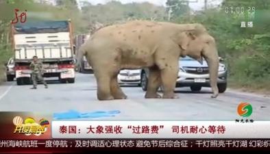 """泰國:大象強收""""過路費"""" 司機耐心等待"""
