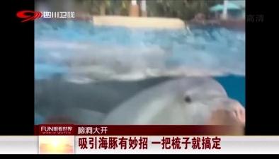 腦洞大開:吸引海豚有妙招 一把梳子就搞定