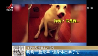 打翻垃圾桶遭主人質問:狗狗一臉無辜 但身體出賣了它
