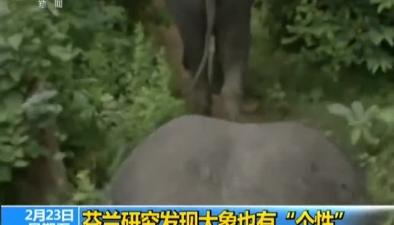 """芬蘭研究發現大象也有""""個性"""""""