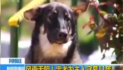 阿根廷:風雨無阻!忠犬為主人守墓11年