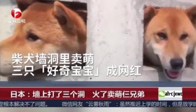 日本:墻上打了三個洞 火了賣萌仨兄弟