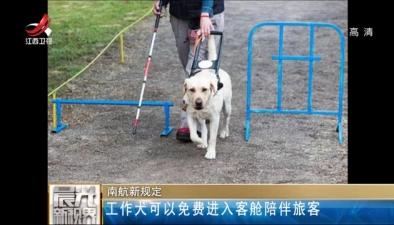 南航新規定:工作犬可以免費進入客艙陪伴旅客