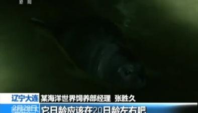 遼寧大連:小斑海豹海灘擱淺 眾人合力救助