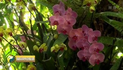 美國紐約蘭花展 罕見品種齊亮相