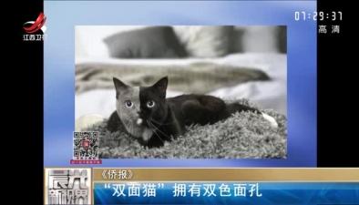 """雙面貓""""擁有雙色面孔"""