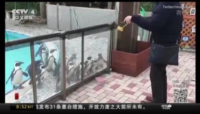 """日本:男子玩悠悠球 企鵝當""""觀眾"""""""