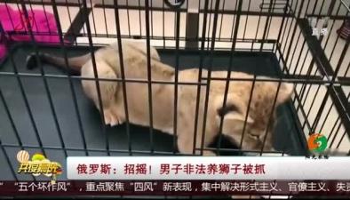 俄羅斯:招搖! 男子非法養獅子被抓