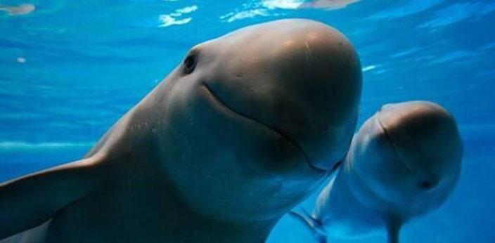 海豚之音:瑞典科學家希望利用人工智能破譯海豚語言