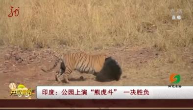 """印度:公園上演""""熊虎鬥"""" 一決勝負"""