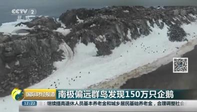 南極偏遠群島發現150萬只企鵝