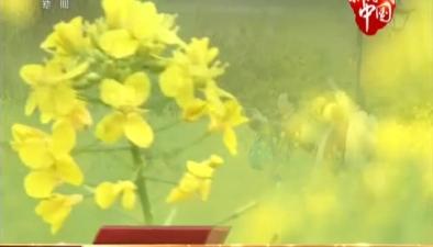 福建福州花海公園:城市公園春光好 花海四季競放