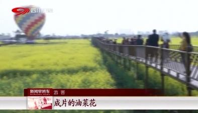吸睛又吸金:廣漢萬畝油菜花開 特色産業富農增收