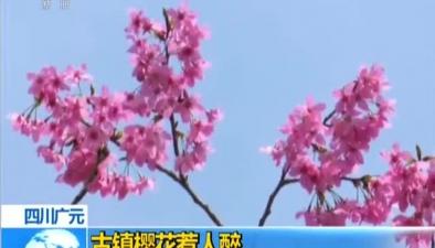 四川廣元:古鎮櫻花惹人醉