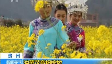 貴州:油菜花競相綻放