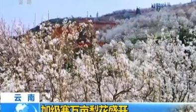 雲南:加級寨萬畝梨花盛開