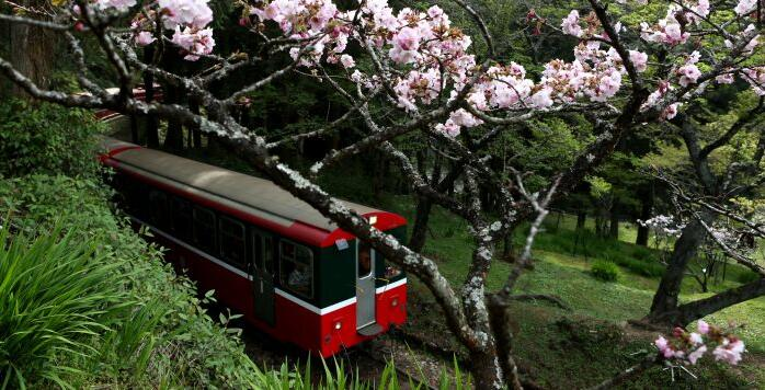 阿裏山小火車出軌頻頻 櫻花季停駛三個月全面檢修