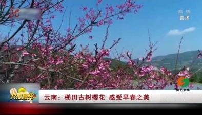 雲南:梯田古樹櫻花 感受早春之美