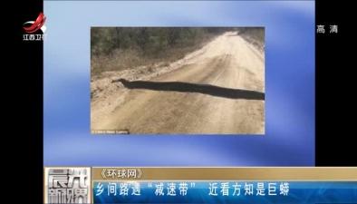 """鄉間路遇""""減速帶"""" 近看方知是巨蟒"""